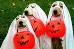 Doggie Ghosts Trick or Treating